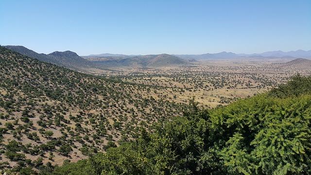 arganbossen in Marokko