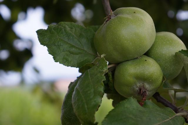 onrijpe appels
